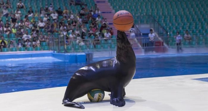 罗源海洋世界海豹表演