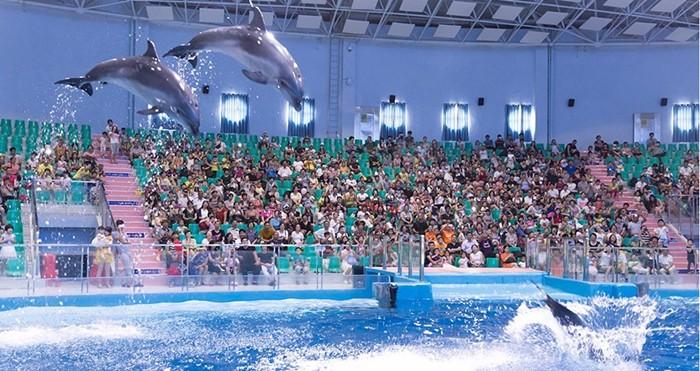 罗源海洋世界海豚表演