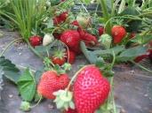 【休闲烧烤 | 10人起】旗山竹林境 射箭+草莓采摘+烧烤含8荤8素食材 休闲自驾一日游
