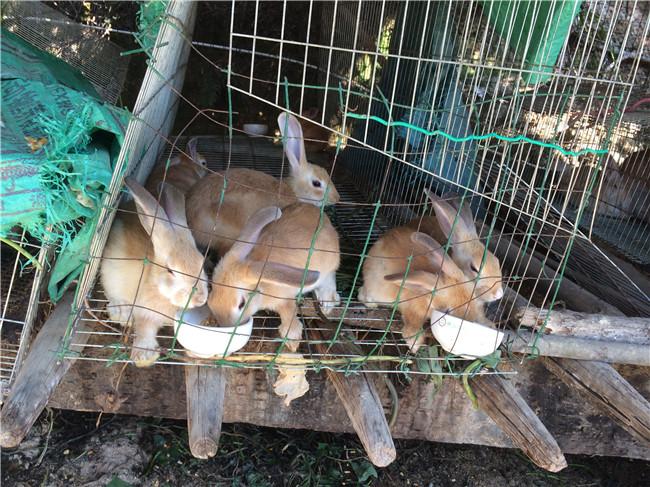 动物 兔子