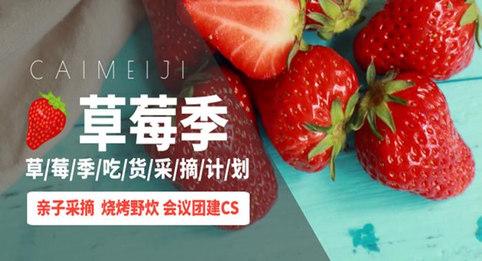 万林草莓采摘